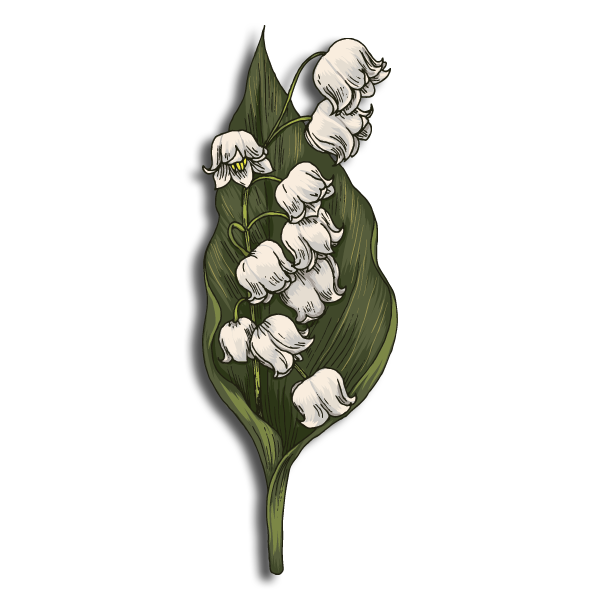 Alpha Delta Phi Flower -Lily of the Valley