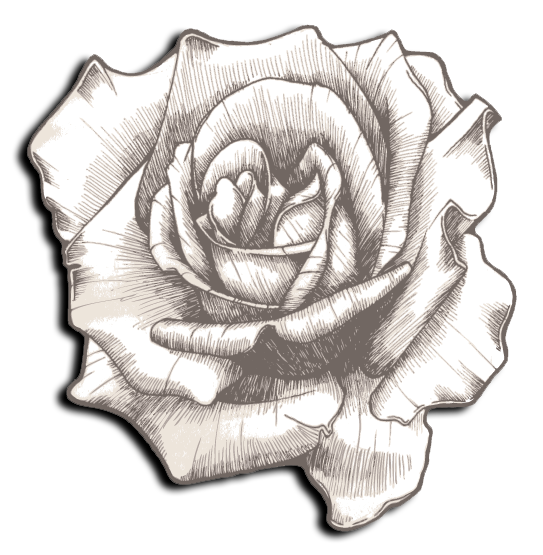 Delta Gamma Flower - Cream Colored Rose