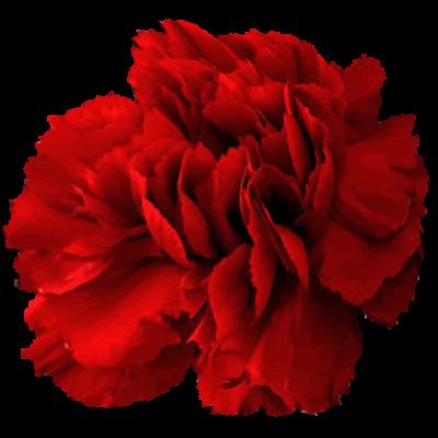 Kappa Alpha Psi Flower - Red Carnation
