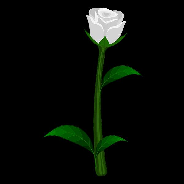 Kappa Delta Flower - White Rose